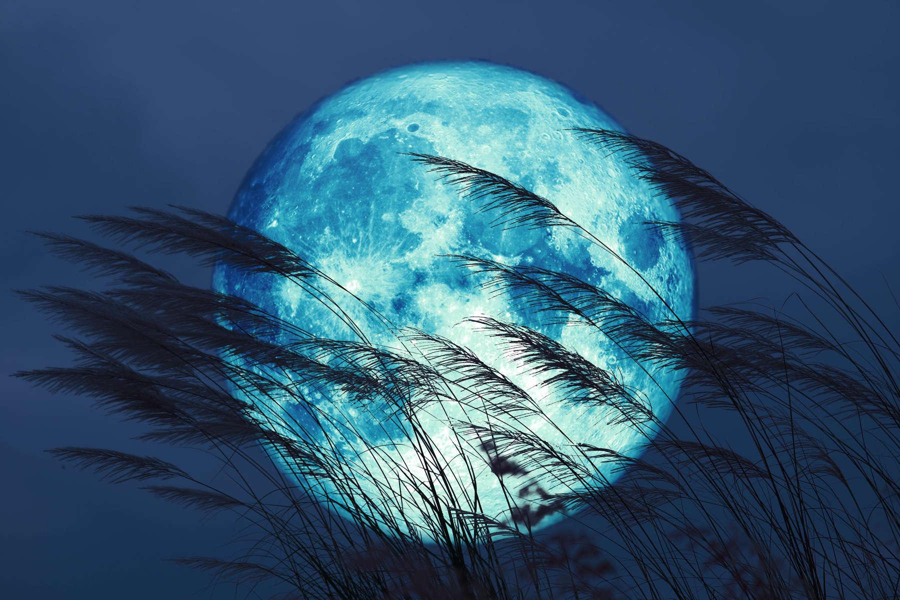 super full harvest moon on night sky back grass flower in the fi